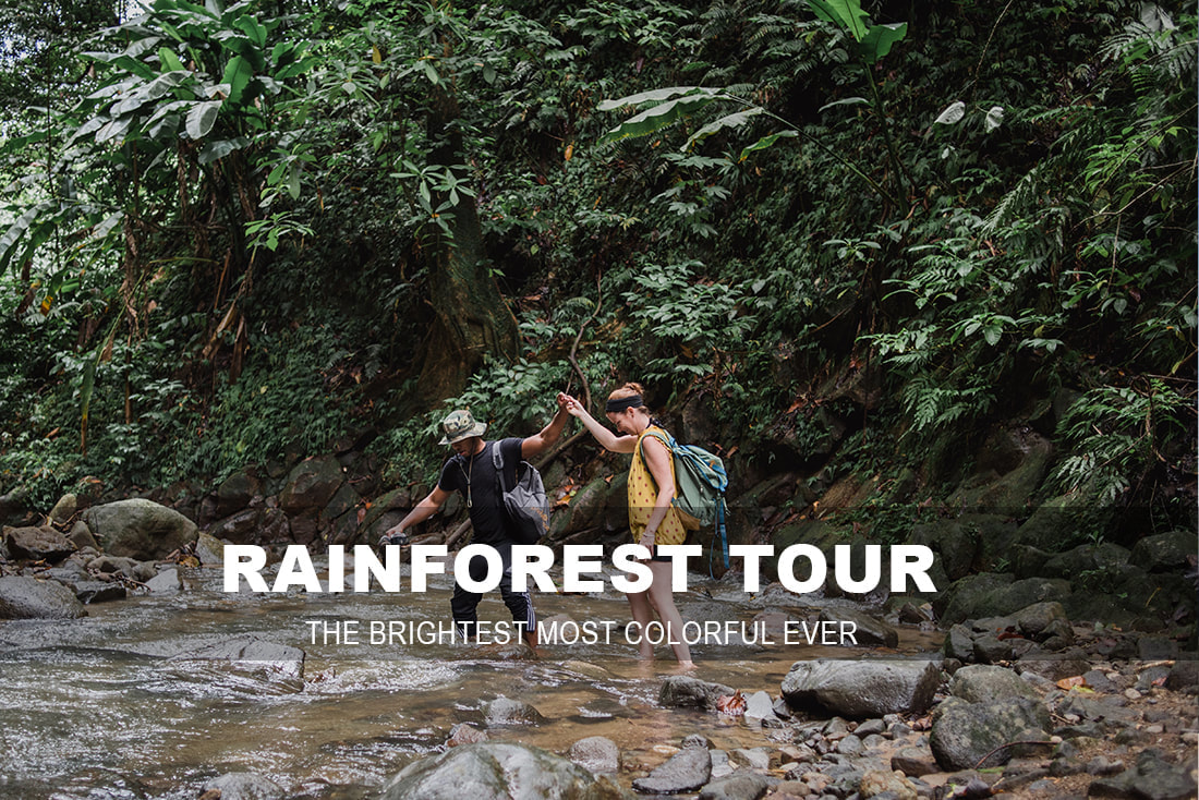 ST. LUCIA RAINFOREST TOUR
